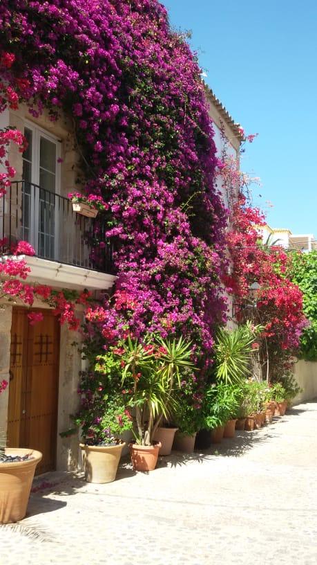 bloemenpracht op Ibiza